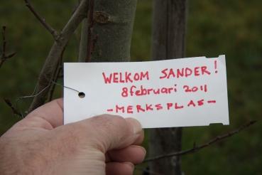 2011 8 februari Populier
